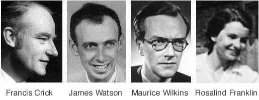 Watson, Crick, Wilkins & Franklin