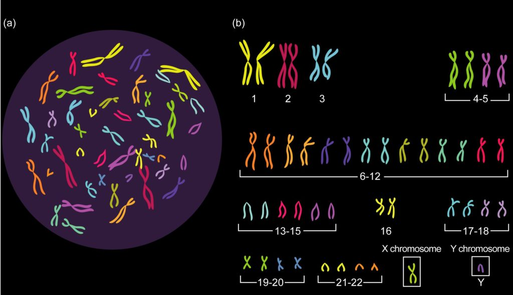 Why is DNA important