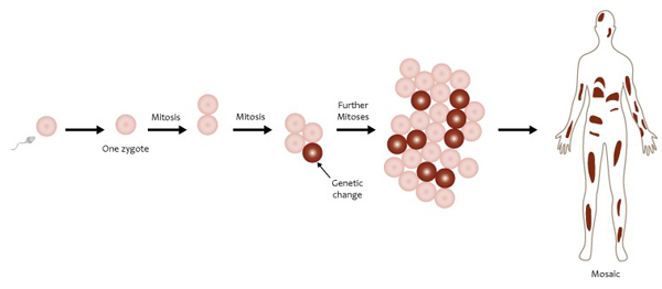Errors during mitosis